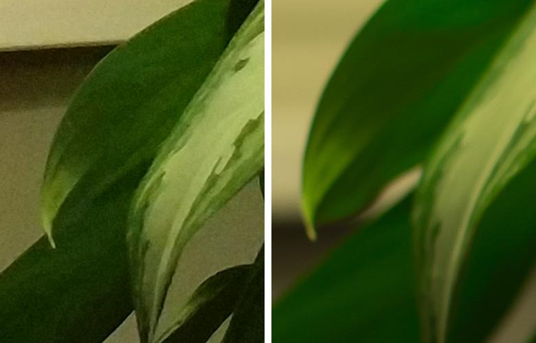 Честное сравнение камеры телефона и зеркального фотоаппарата - 9