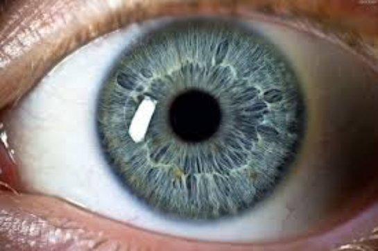 Исследование стволовых клеток направлено на лечение слепоты