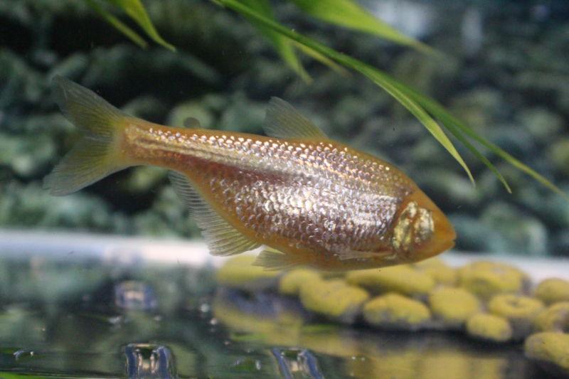 Слепая рыба из Мексики с инсулинрезистентностью может помочь бороться с диабетом у людей - 1