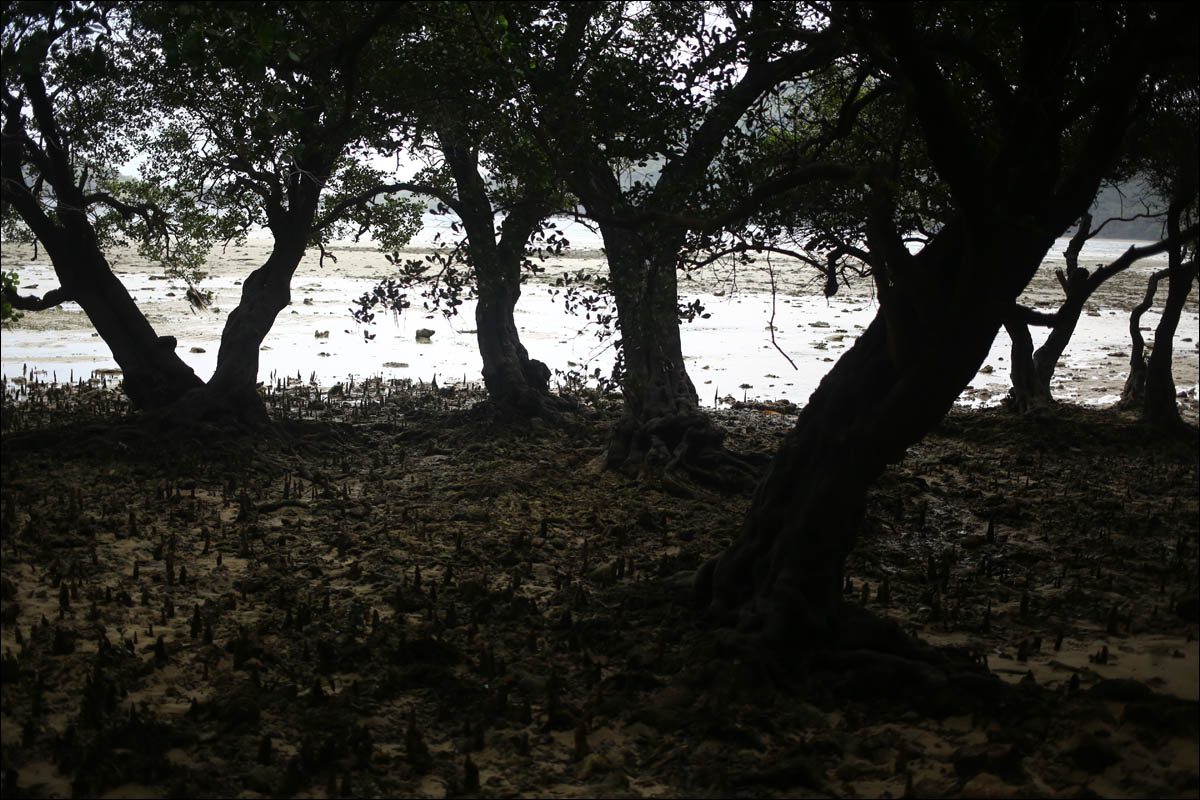 Мангровый лес: крутейший биом планеты - 11