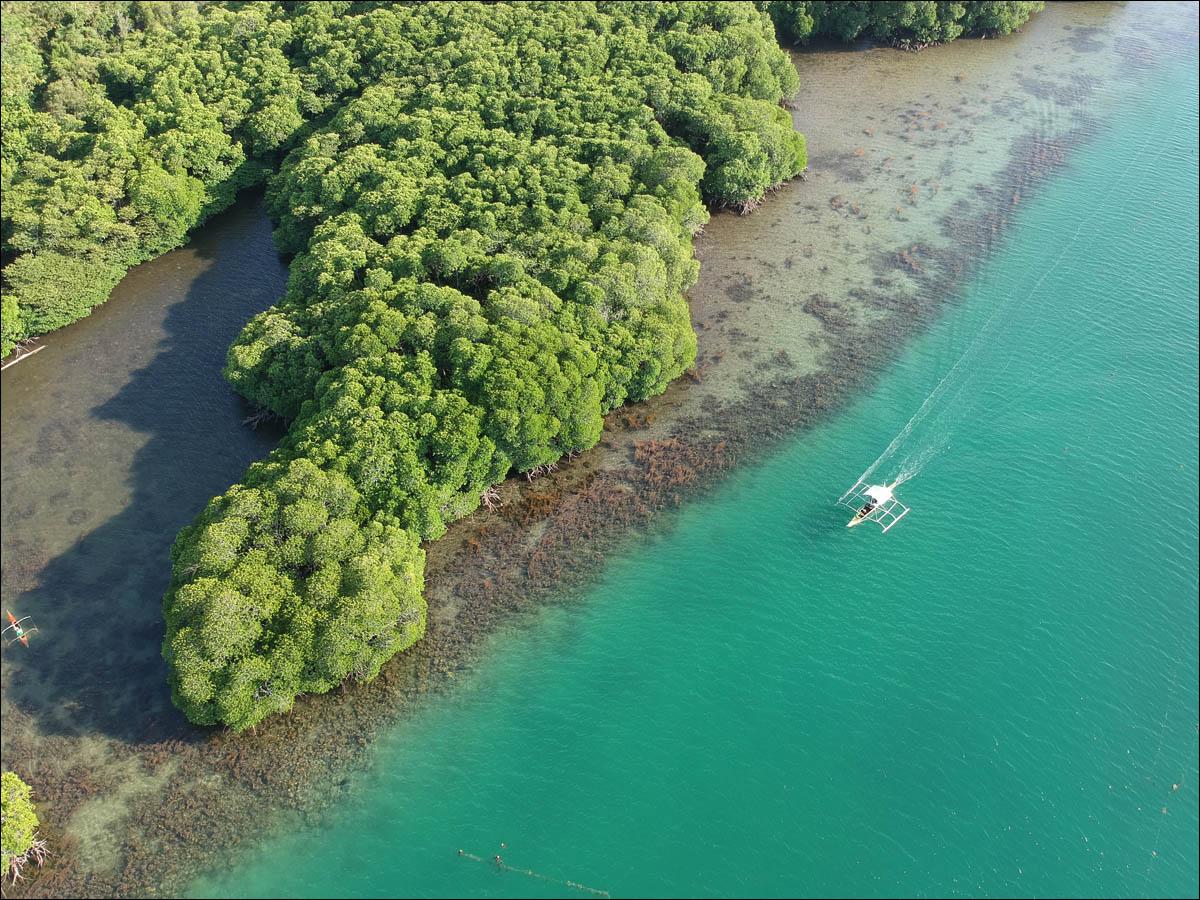 Мангровый лес: крутейший биом планеты - 5