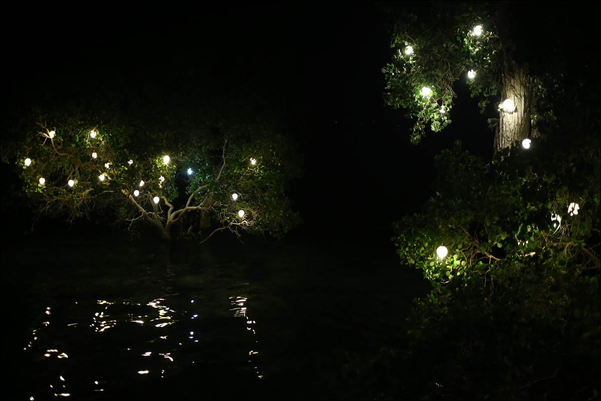 Мангровый лес: крутейший биом планеты - 7