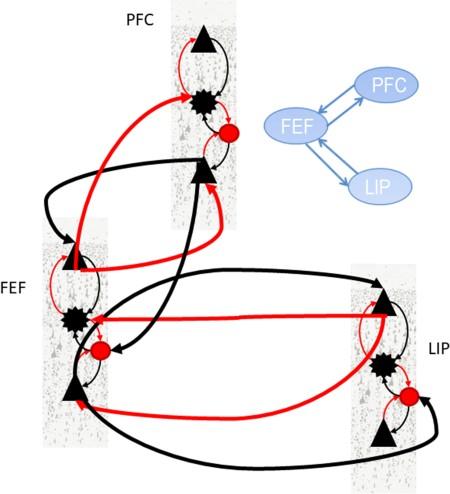 При перегрузке рабочей памяти у человека нарушается синхронизация между тремя отделами мозга - 2