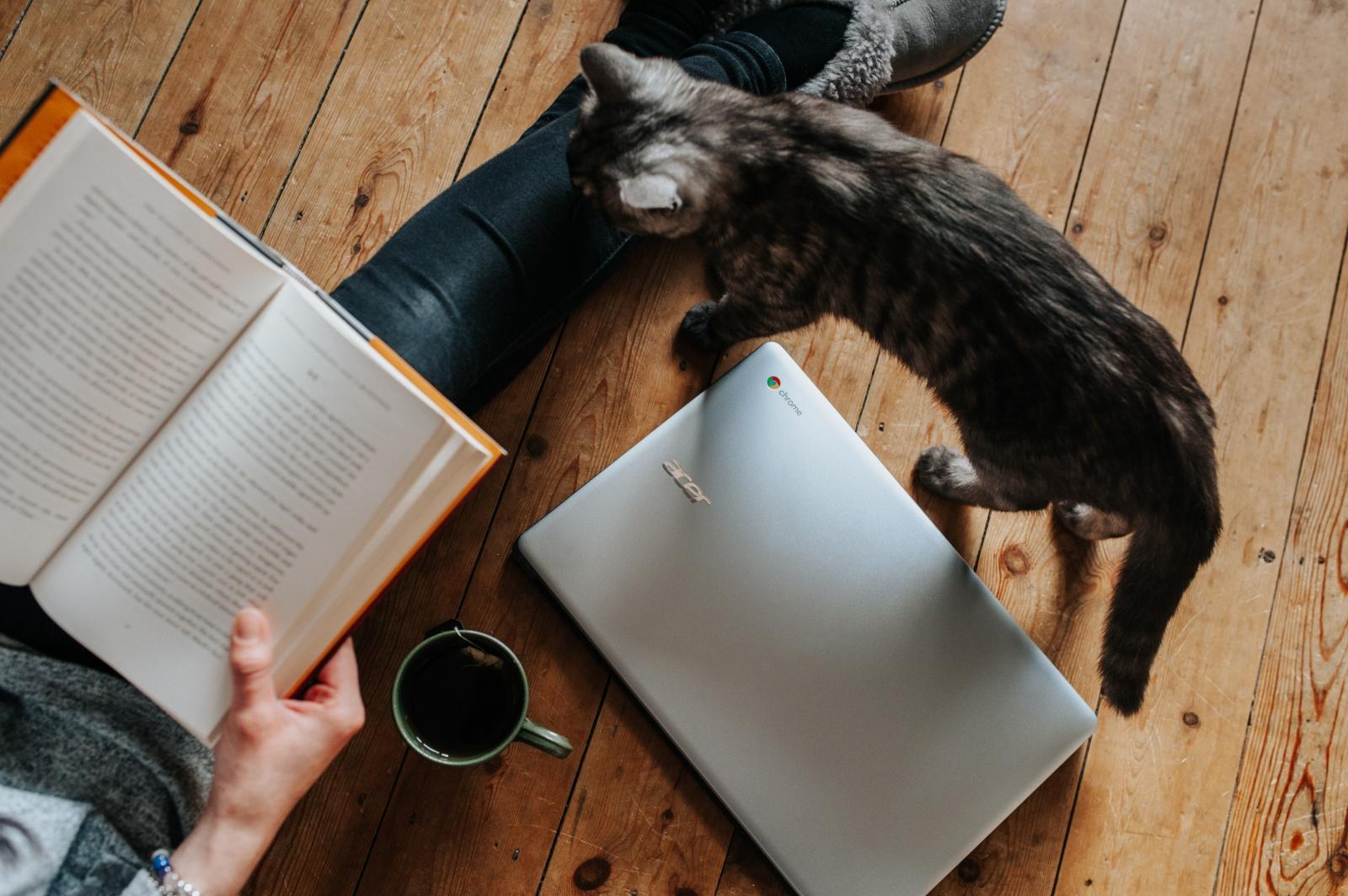 Эксперименты на котиках: как увеличить количество покупок в приложении - 1