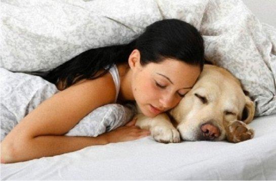 Сон людей и животных отличается