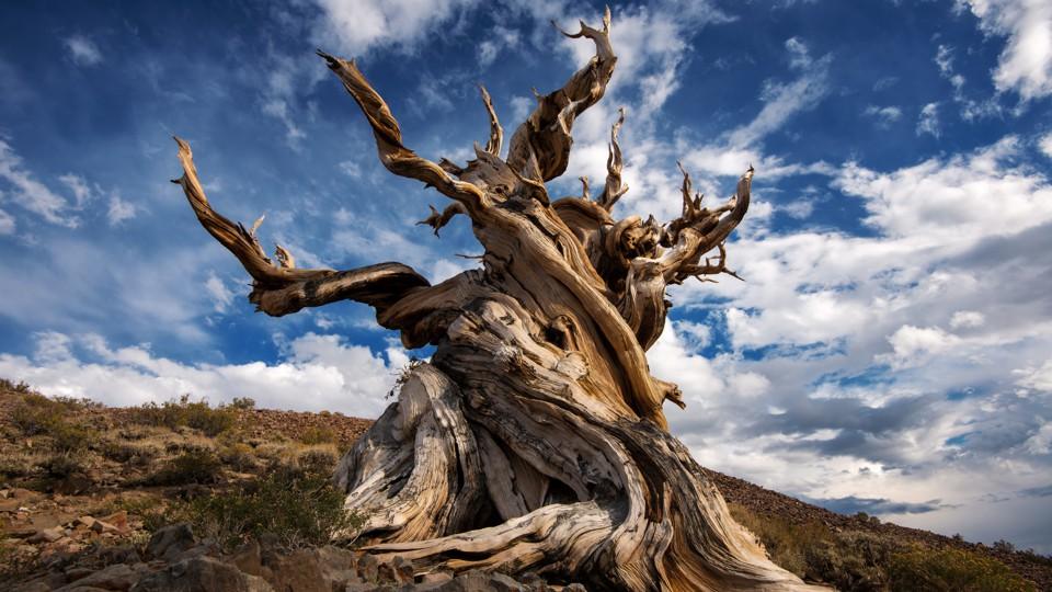 Учёные до сих пор не могут дать определение дереву - 1