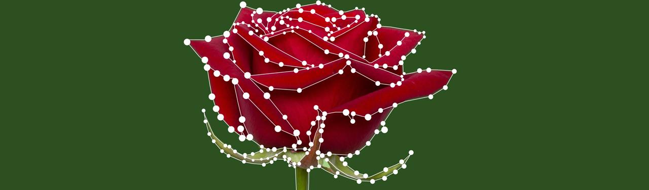 Почему розы приятно пахнут - 1