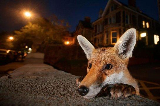 Животные мутируют в больших городах