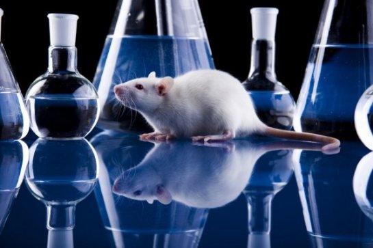 Животные восстанавливают прошлое в своей памяти в хронологическом порядке