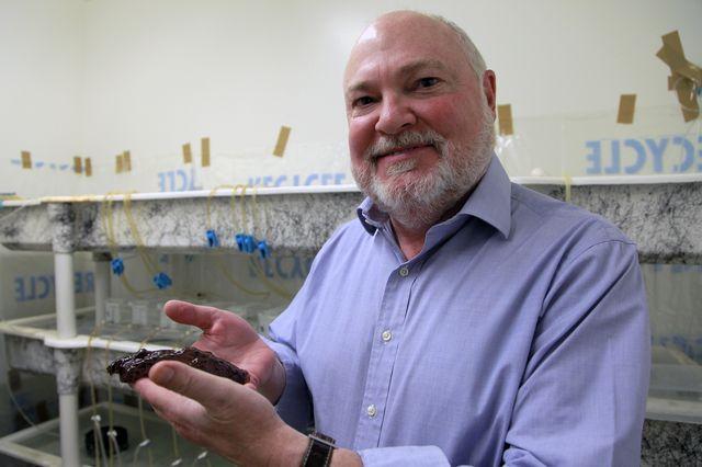 Учёные провели эксперимент по копированию долговременной памяти у морских зайцев путём инъекции РНК - 1