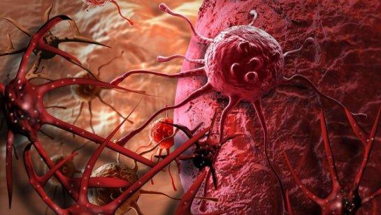«Бессмертные раковые клетки» можно убить