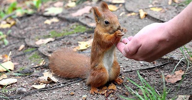 Почему нельзя кормить белок арахисом, но можно капустой?