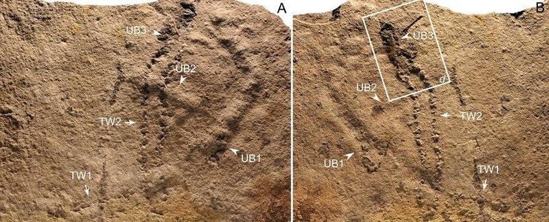Найдены древнейшие следы животного