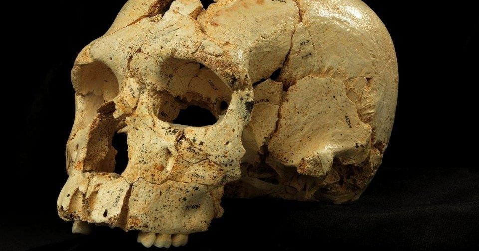 Насколько был распространен каннибализм у предков человека?