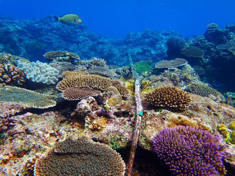 Оптоволоконные подводные кабели могут работать и в качестве сейсмографов - 1