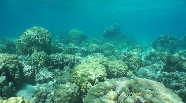 Коралловые рифы хранят секреты прошлого и будущего океанов - 1