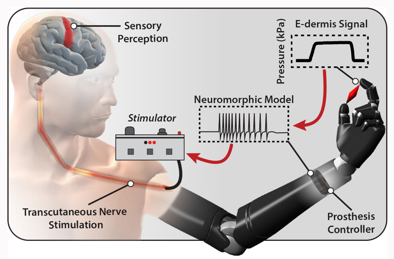 В Университете Джонса Хопкинса создали искусственную кожу, которая чувствует боль - 1