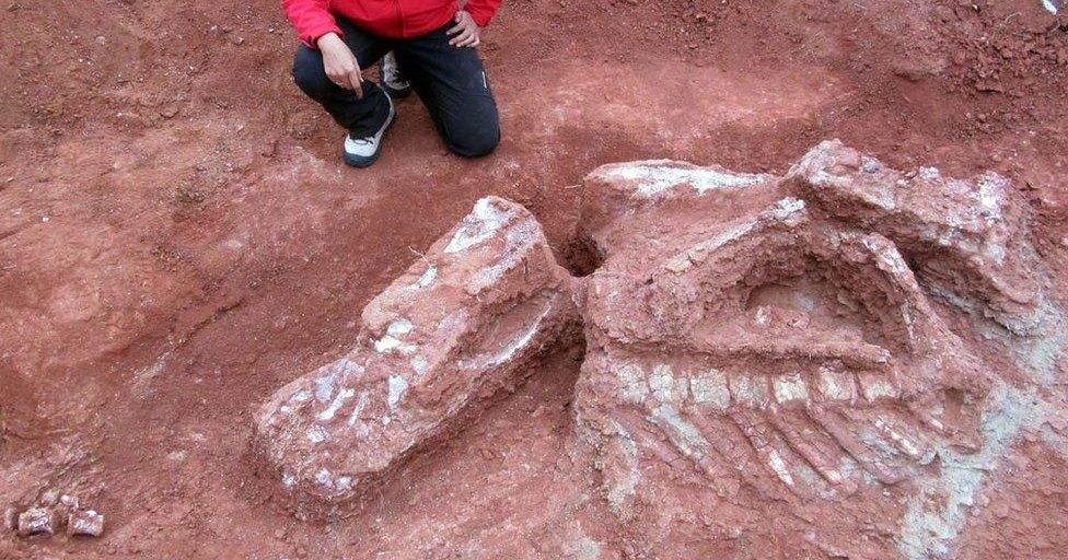 Археологи обнаружили кости самого большого из ранних динозавров