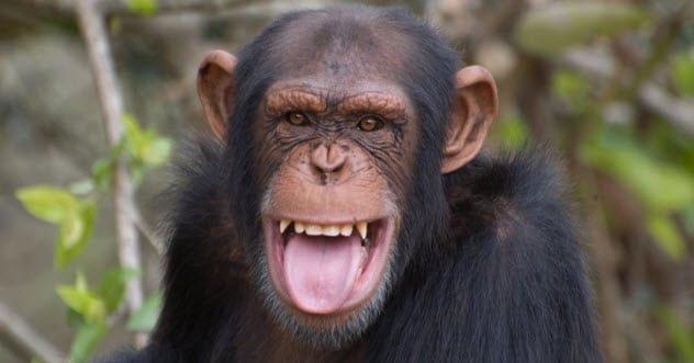 7 экспериментов по созданию гибрида человека и животного