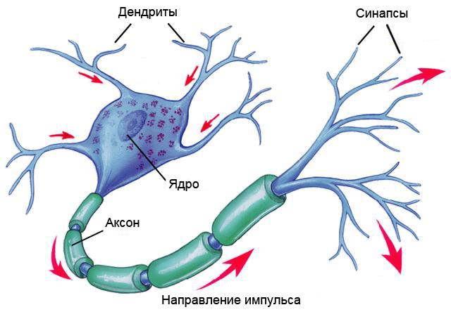 Рецепт искусственного мозга: нанотрубки, полиоксометаллат и щепотка электронов - 4