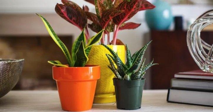 Как поливать цветы, когда вас нет дома: 4 полезных лайфхака