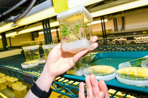 Crispr может ускорить природные процессы и изменить способы выращивания еды - 10