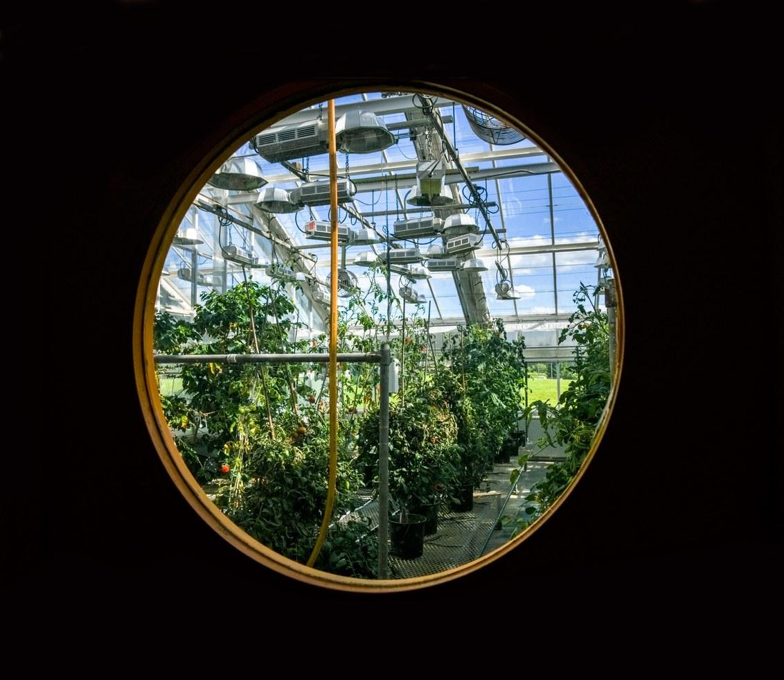 Crispr может ускорить природные процессы и изменить способы выращивания еды - 4