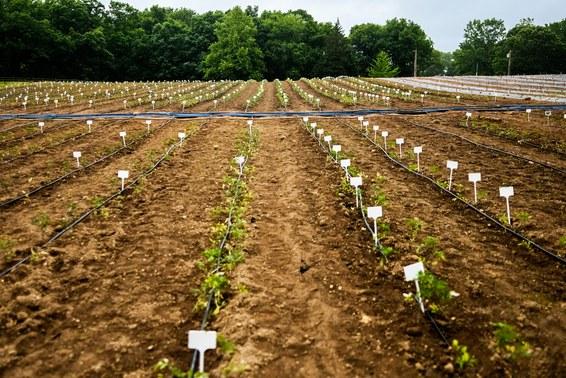 Crispr может ускорить природные процессы и изменить способы выращивания еды - 5