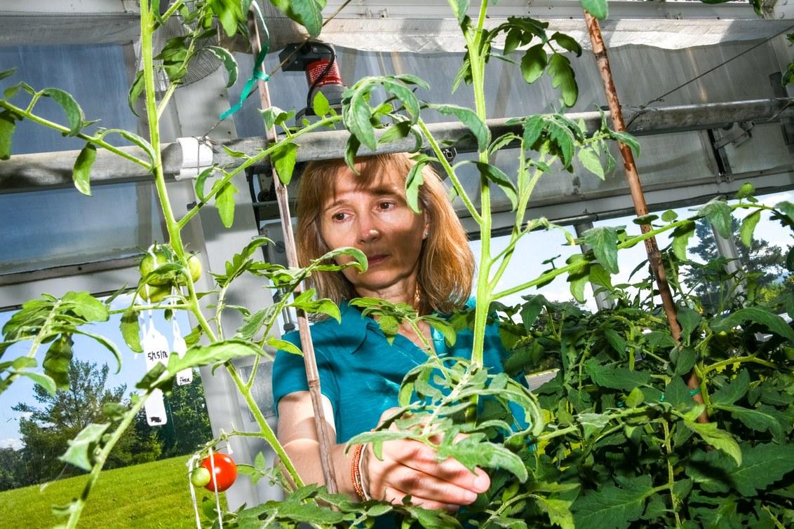 Crispr может ускорить природные процессы и изменить способы выращивания еды - 7