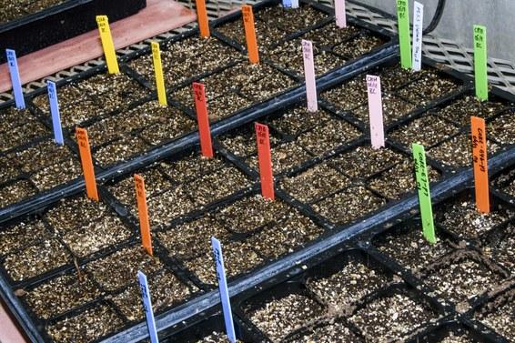 Crispr может ускорить природные процессы и изменить способы выращивания еды - 9