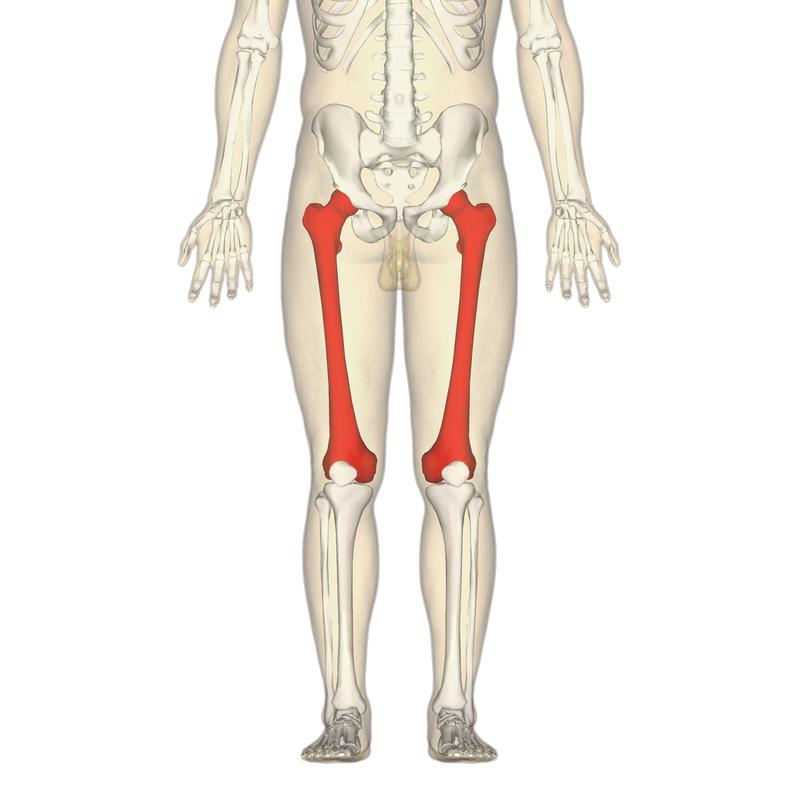 9 интересных фактов о человеческом скелете