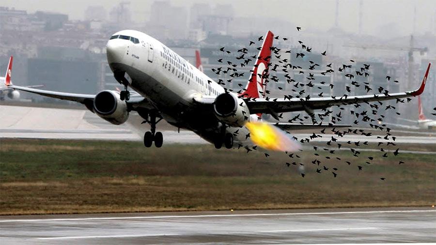 Автономные дроны будут отгонять стаи птиц от аэропортов - 1