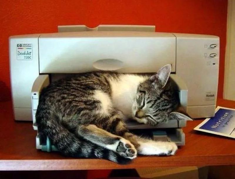 Как выбрать 3D-принтер: руководство для начинающих - 2
