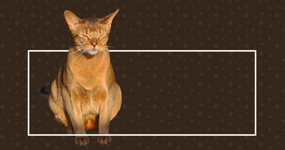 5 приемов работы с CSS, о которых вам следует знать - 5