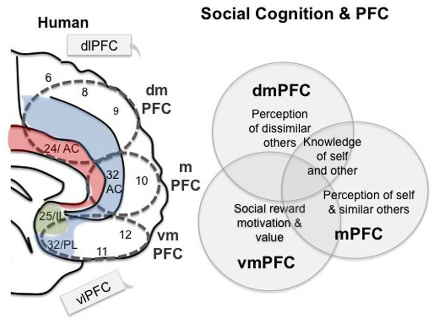 Тренировка эмпатии: стимуляция нейронных связей мозга посредством видеоигры - 5