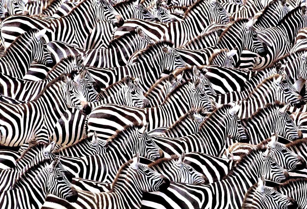 Теория счастья. Закон зебры и чужой очереди - 1