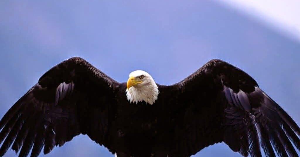 Самые красивые атаки хищных птиц