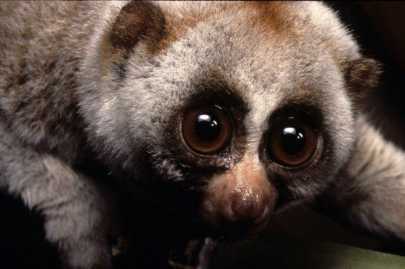 7 опасных животных с безобидным внешним видом