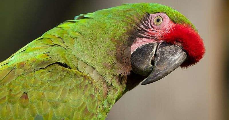 Попугаи оказались способны на экономически обоснованные решения