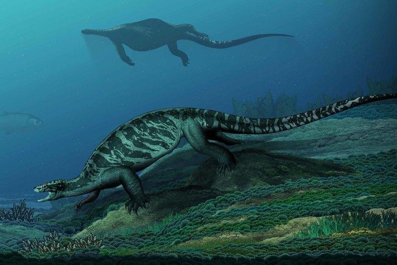 В Китае нашли окаменелости древней гигантской черепахи