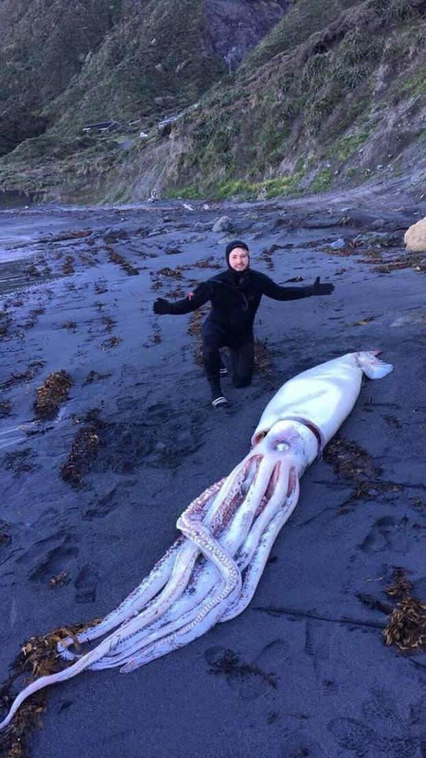 На берег в Новой Зеландии выбросило гигантского кальмара