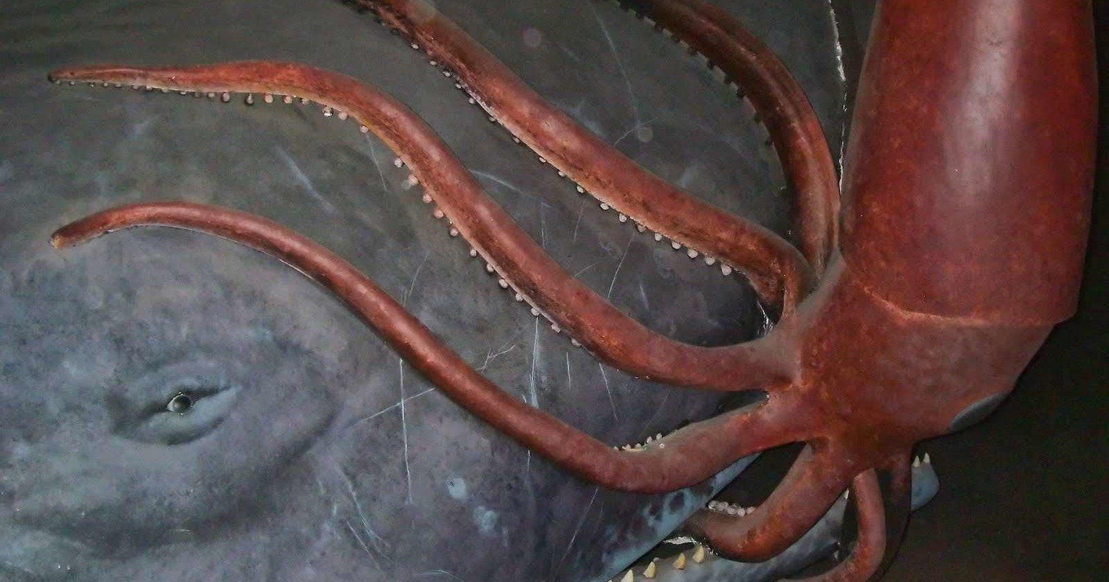 Гигантский кальмар в естественной среде