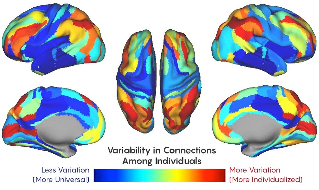 «Функциональный отпечаток» мозга может служить его идентификатором в течение всей жизни - 3