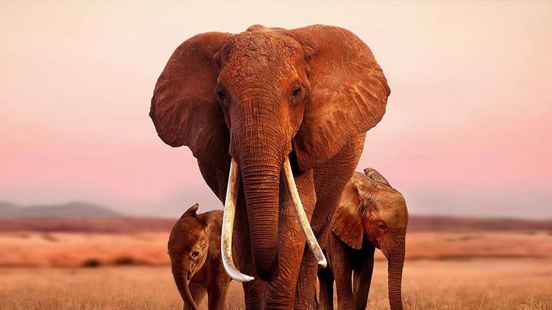 Apple купила права на документальный фильм про слонов