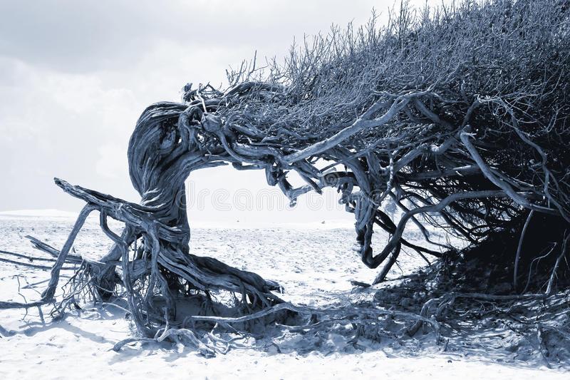 Ленивое Дерево