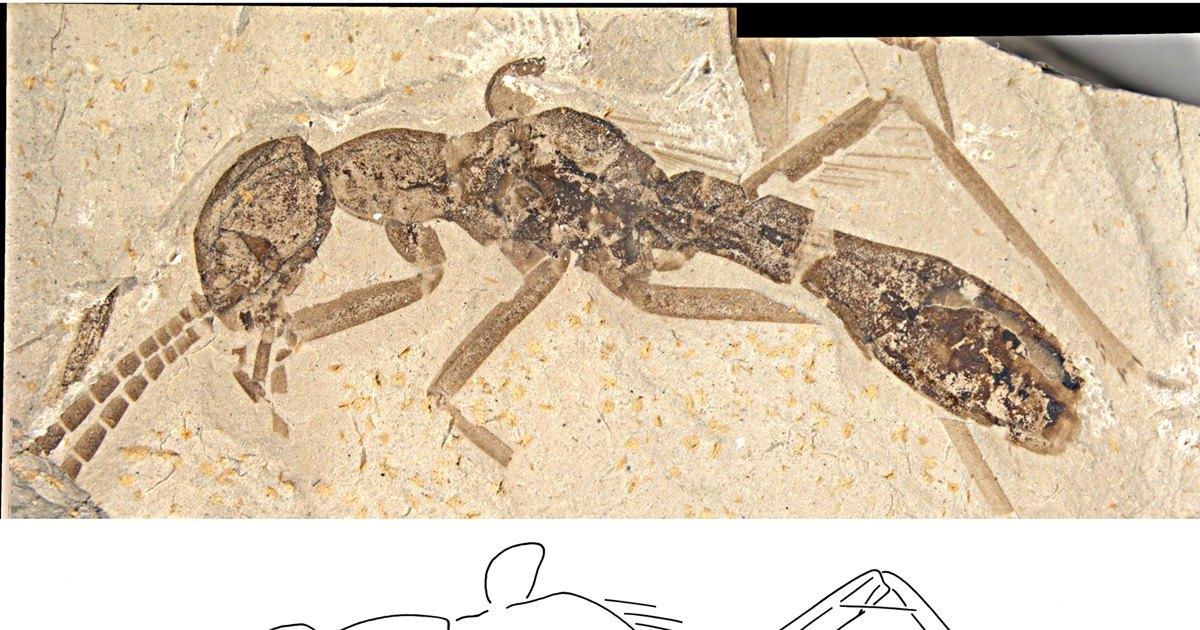 Найден древний таракан, притворявшийся муравьем