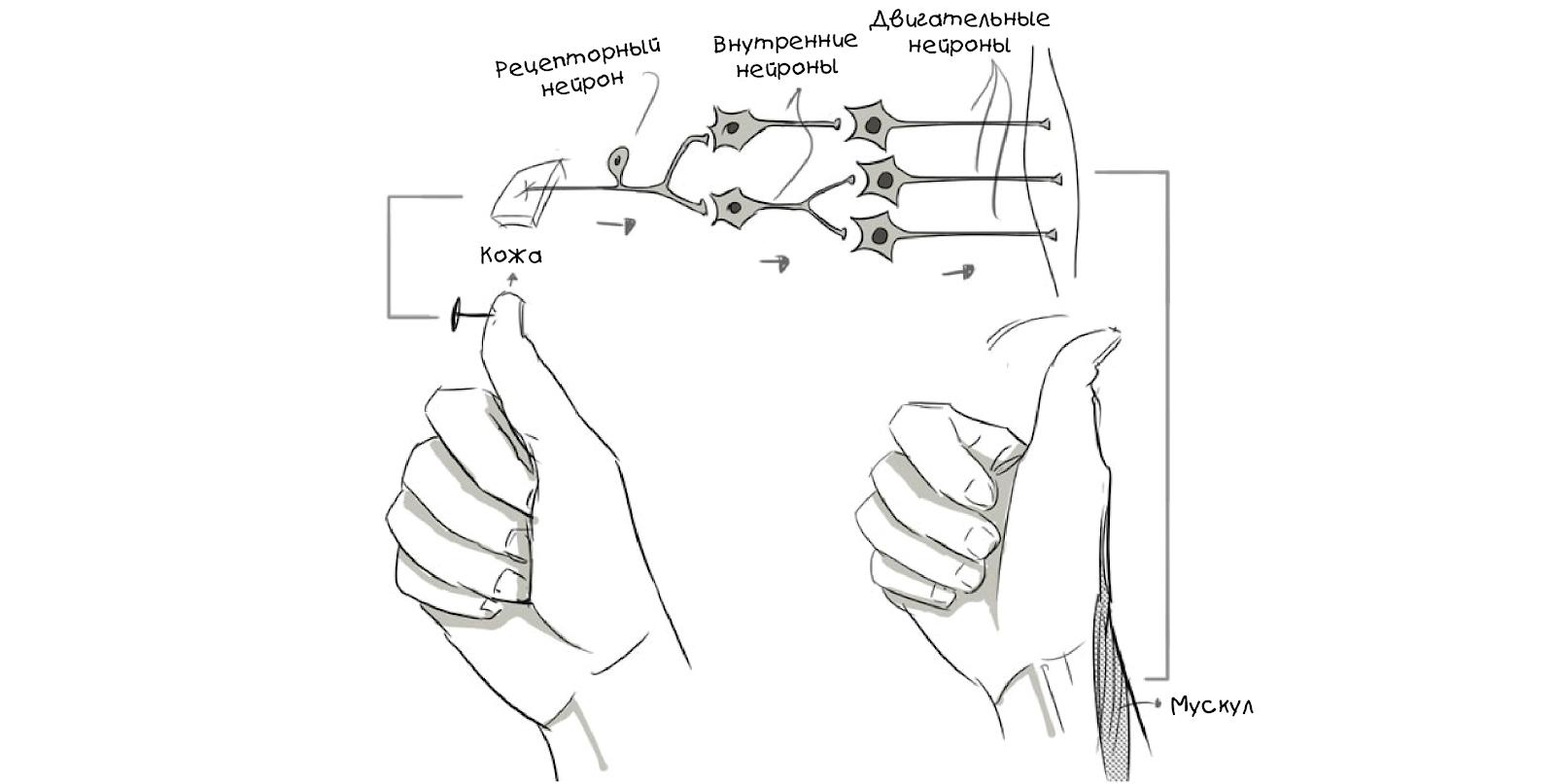 Создаём простую нейросеть - 7