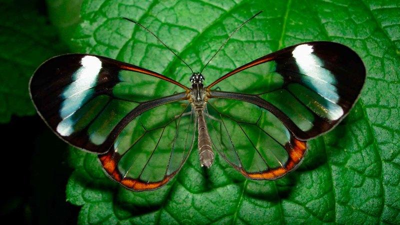 6 изумительно красивых насекомых