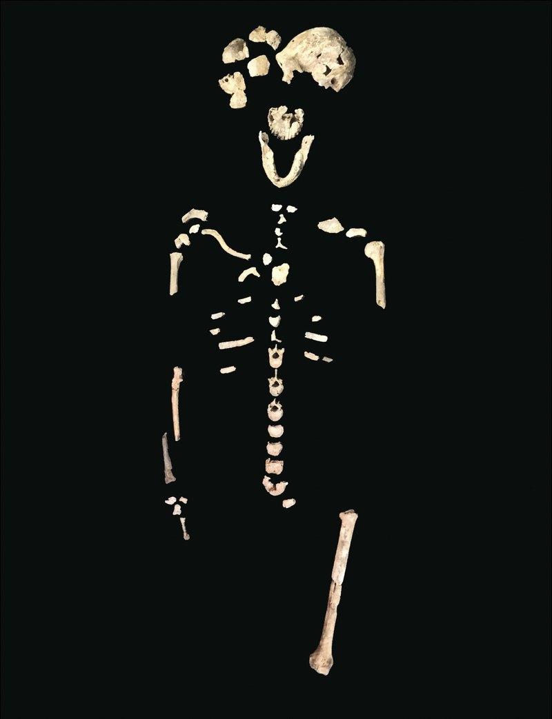 Что мы знаем о Homo naledi: 7 интересных фактов - 2