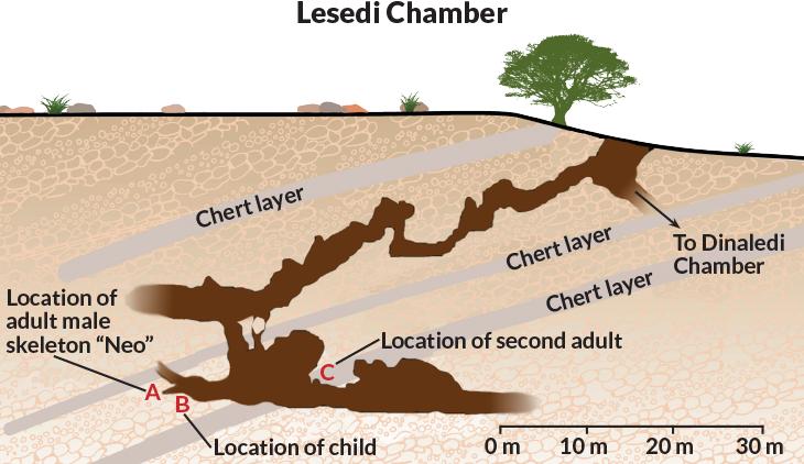 Что мы знаем о Homo naledi: 7 интересных фактов